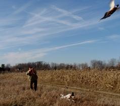 Buckeye Pheasant Farm, 2009