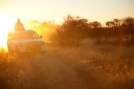 driving-sunset.jpg