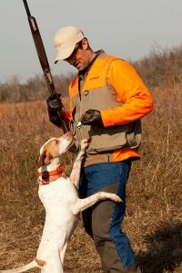 Quail hunting in Kentucky