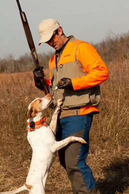 Quail hunting in Kentucky